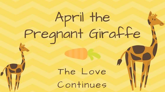 April the Pregnant Giraffe: The Giraffe Love Continues
