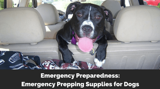 Emergency Preparedness: Emergency Prepping Supplies for Dogs