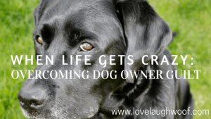 Overcoming Dog Owner Guilt