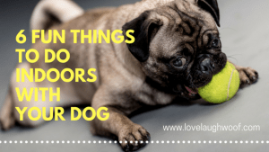 6 Fun Indoor Things to Do with Your Dog
