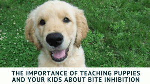 The Importance of Teaching Puppies and Your Kids About Bite Inhibition (3)