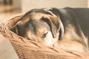 SUMMER HEAT AND DOGS: KNOW YOUR DOG'S LIMITS