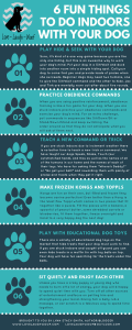 6 Fun Things to Do Indoors with Your Dog