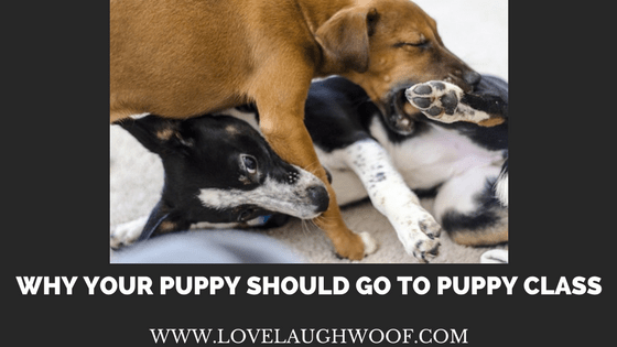 Why Your Puppy Should Go to Puppy Class