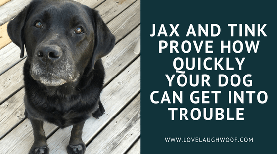 Jax and Tink Prove How Quickly Your Dog Can Get into Trouble