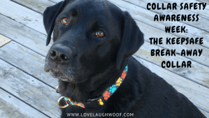 Collar Safety Awareness Week: The KeepSafe Break-Away Collar
