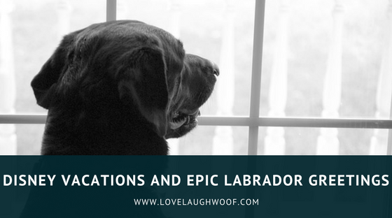 Disney Vacations and Epic Labrador Greetings
