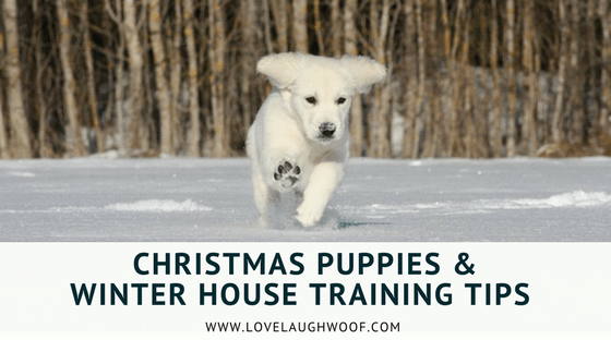 Christmas Puppies & Winter House Training Tips