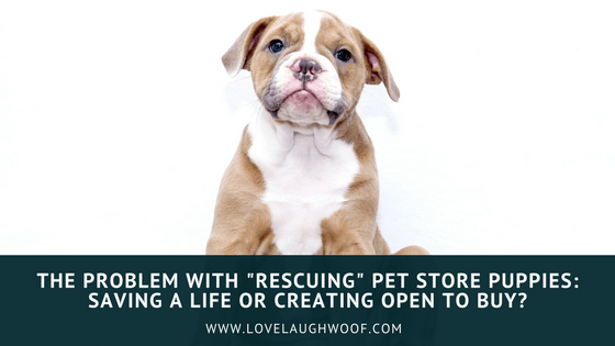 """The Problem with """"Rescuing"""" Pet Store Puppies: Saving a Life or Creating Open to Buy?"""