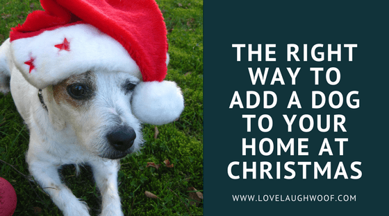 The Right Way to Add a Dog to Your Home at Christmas