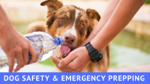 Safety and emergency prepping for dogs