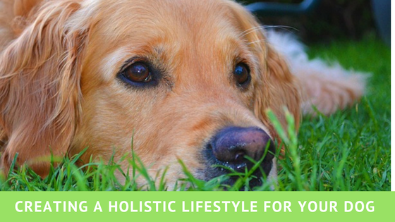 Creating a holistic lifestyle for your dog