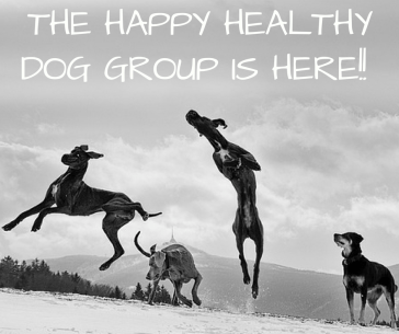 Happy Healthy Dogs Group on Mighty Networks