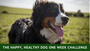 Happy Healthy Dog One Week Challenge