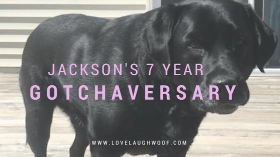Jackson's 7 Year Gotchaversary