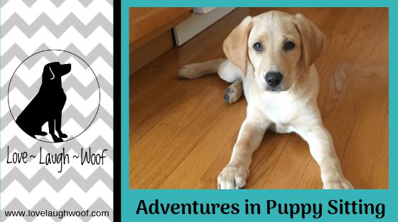 Adventures in Puppy Sitting