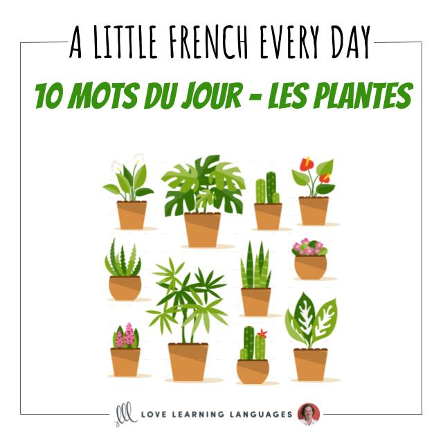 French Vocabulary list - 10 words about plants