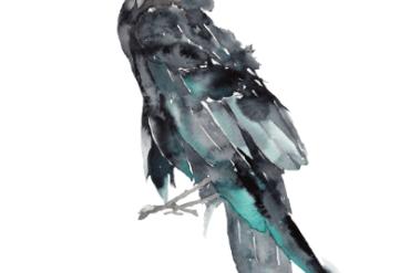 Watercolor raven