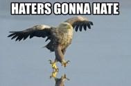 http://icanhasinternets.com/wp-content/uploads/2010/05/haters14.jpg