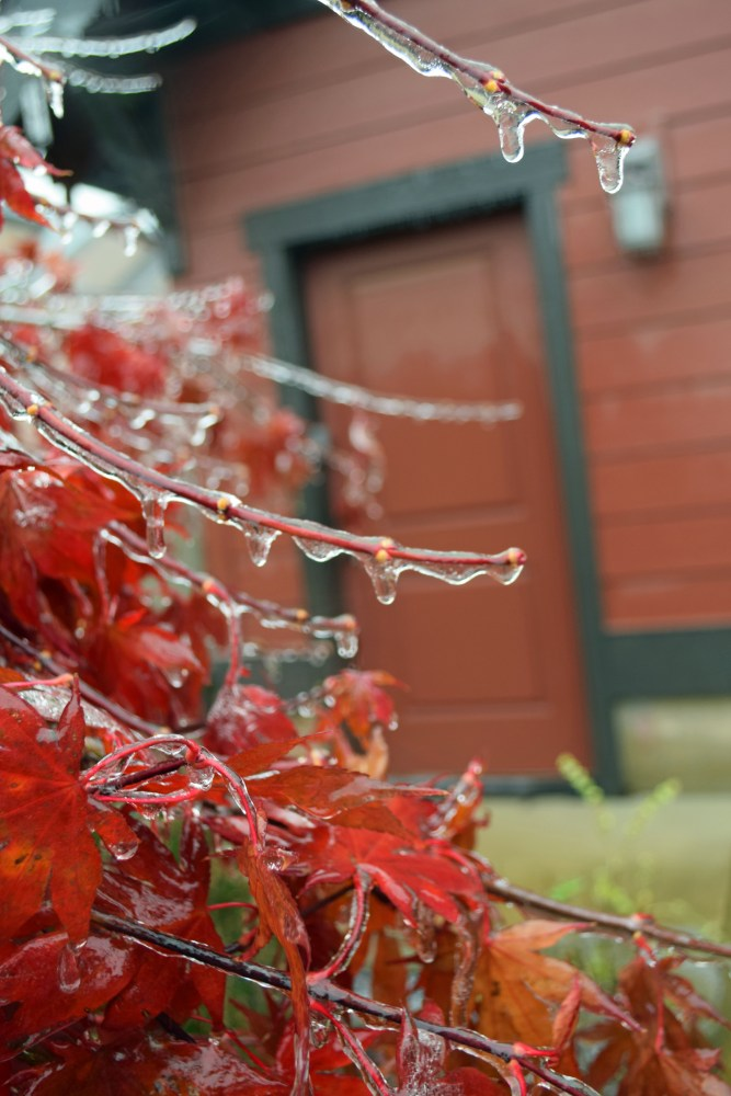 November Ice (2/4)