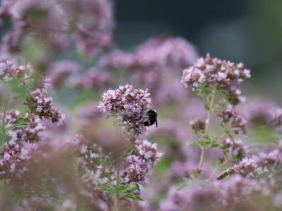 bee n flower