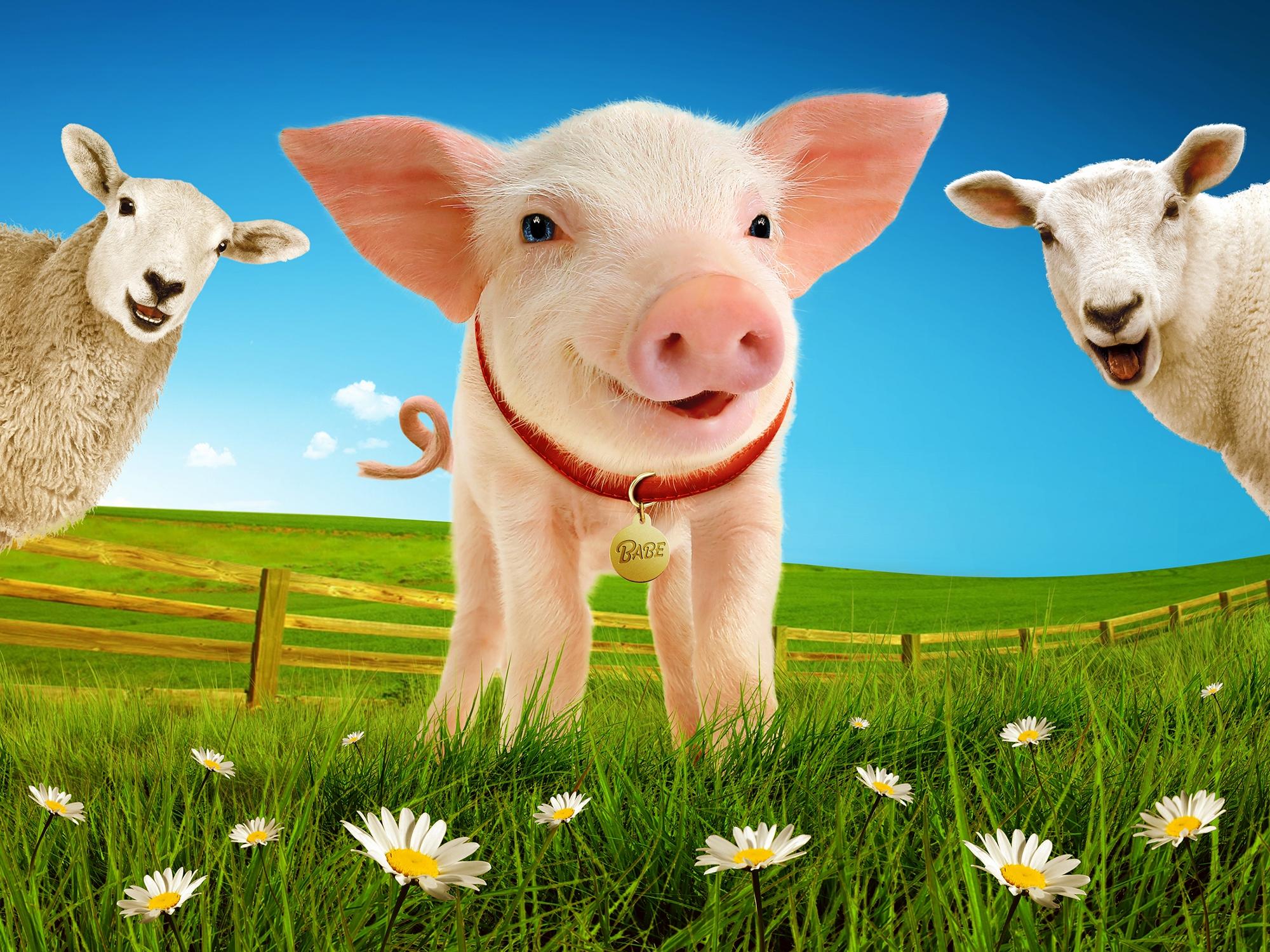 Babe%2c The Sheep-Pig - Landscape image.jpg