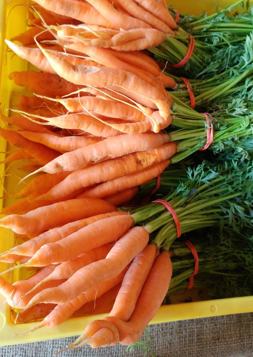 Carrots in a Yellow Bin UnwifedMotherExpletive