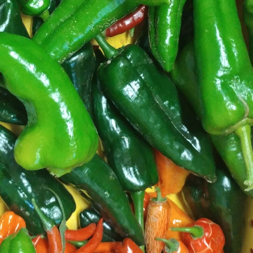 Hot Peppers School is in Session UnwifedMotherexpletive