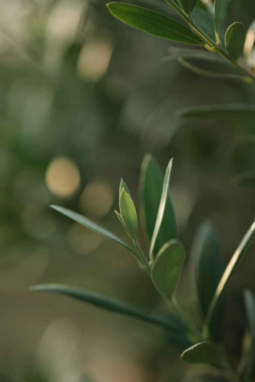 tender green plant leaves in lush garden