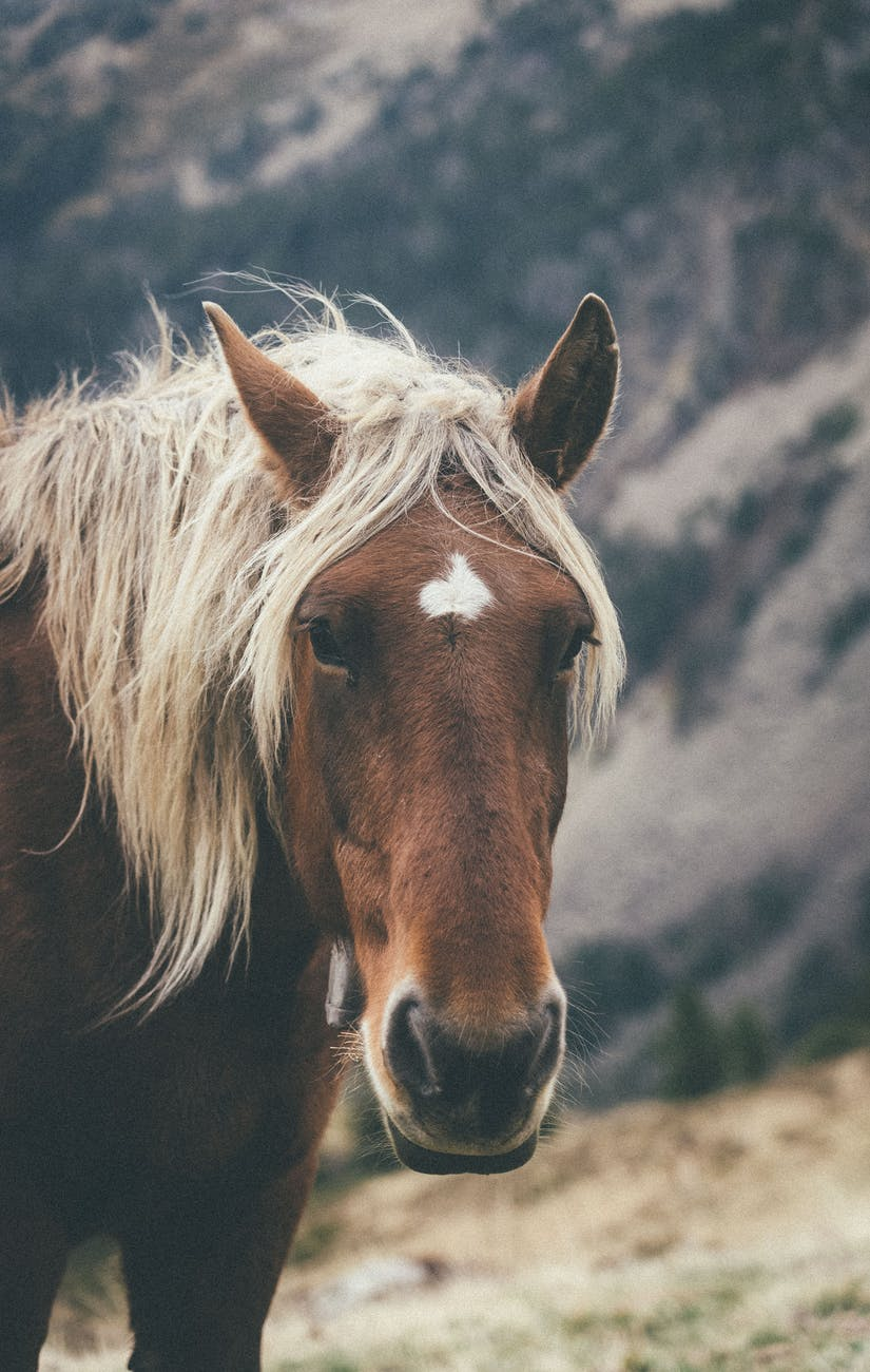 adorable horse standing on pasture in mountains