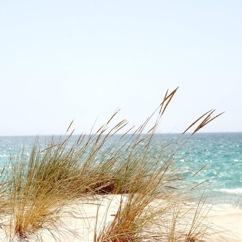 grass beside the sea