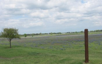 bluebonnet fields texas hill country