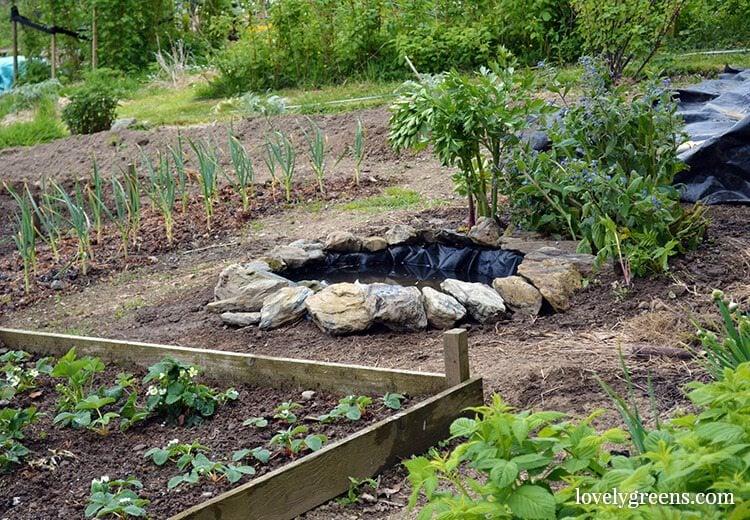 How Build Small Garden Pond