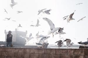Read more about the article Essaouira