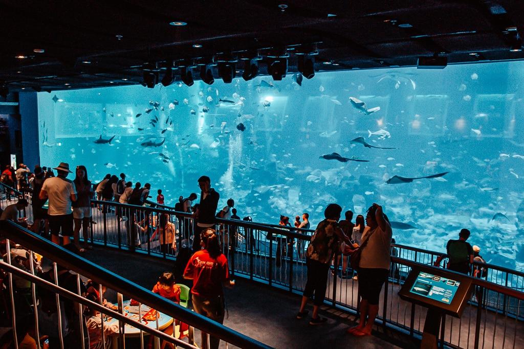 aquarium singapour