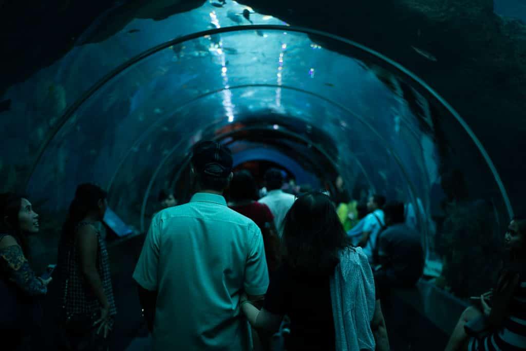 tunnel aquarium singapour