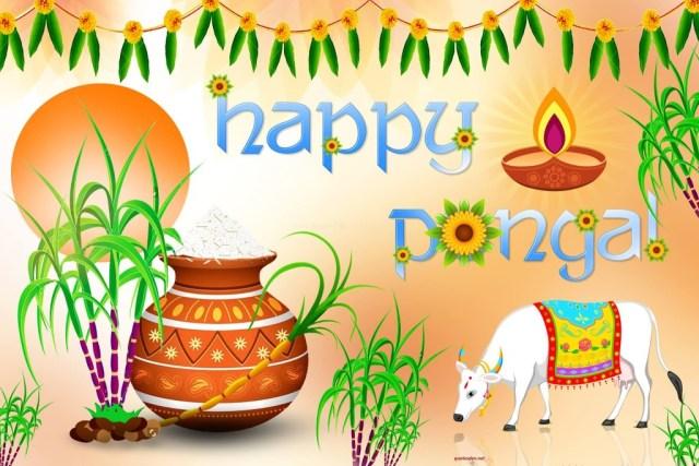 Happy Pongal 2016 Hd Wallpaper Cute