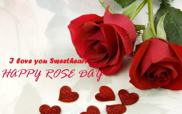 Happy-Rose-Day 2016 HD Wallpaper
