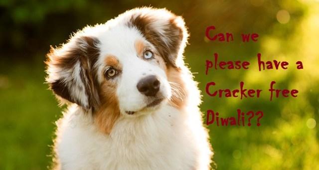 dog-saying-no-to-crackers-free-diwali-wallpaper