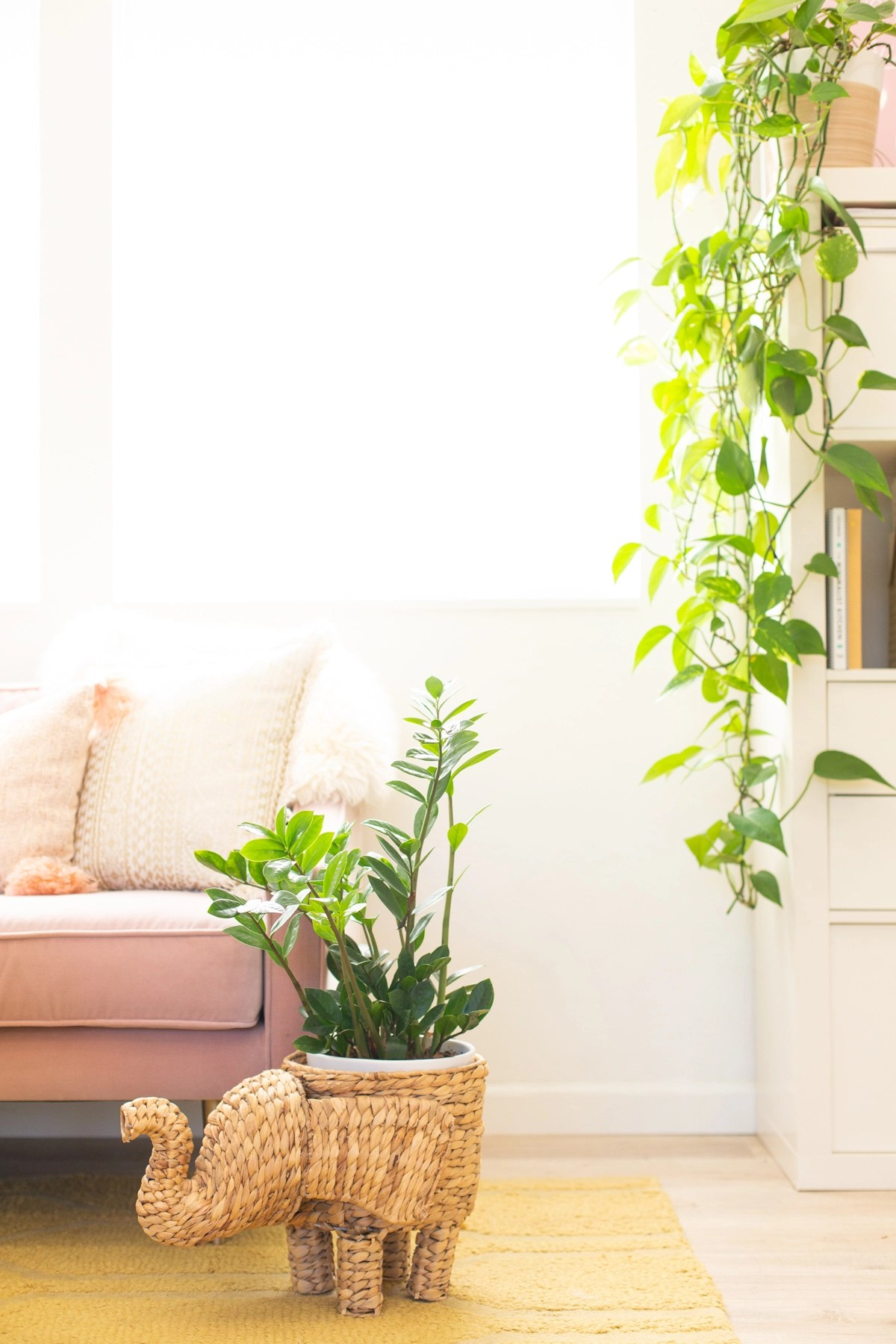 Twelve Low Light Indoor Plants You Probably Can T Kill
