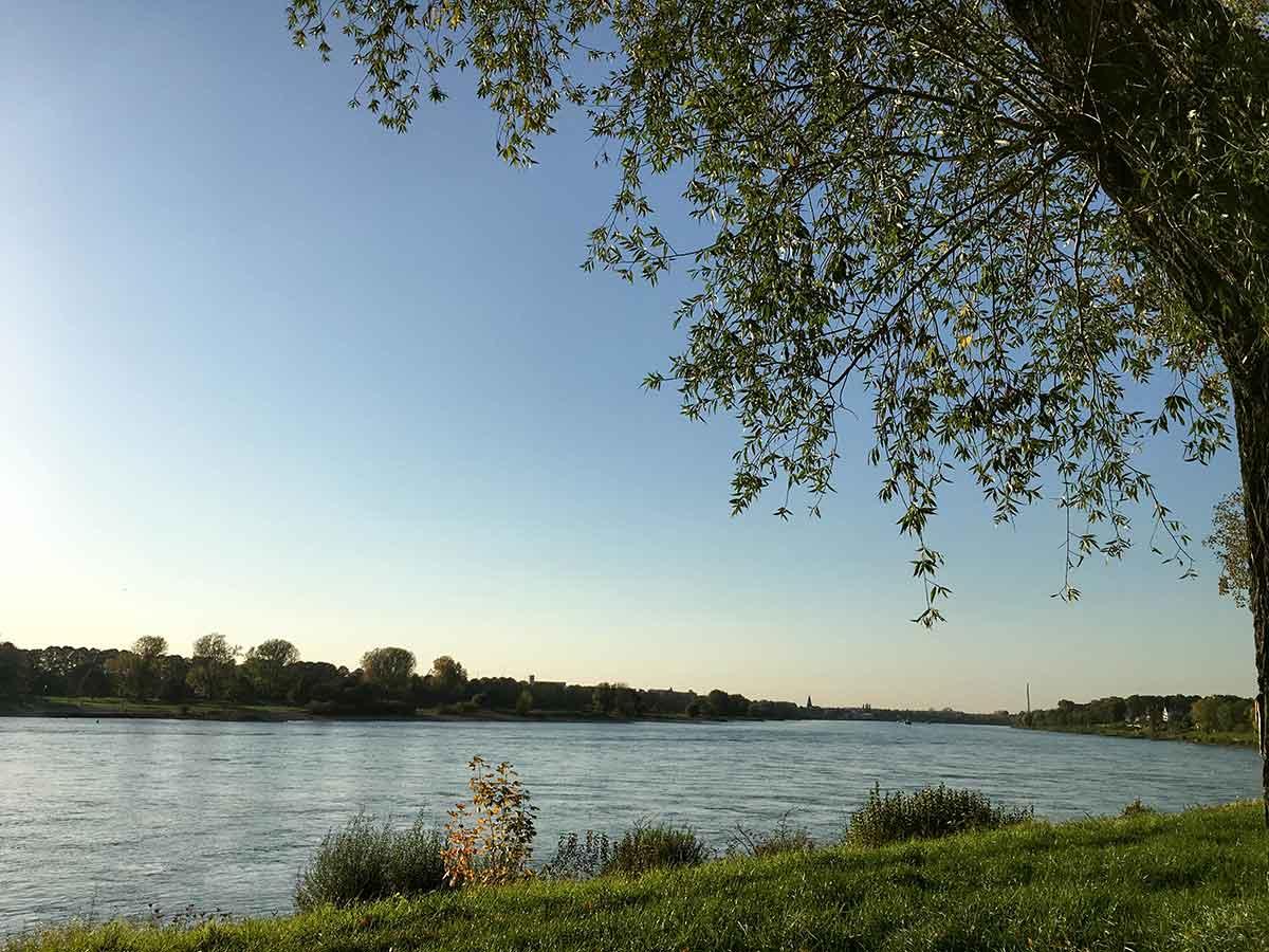 Rhein View
