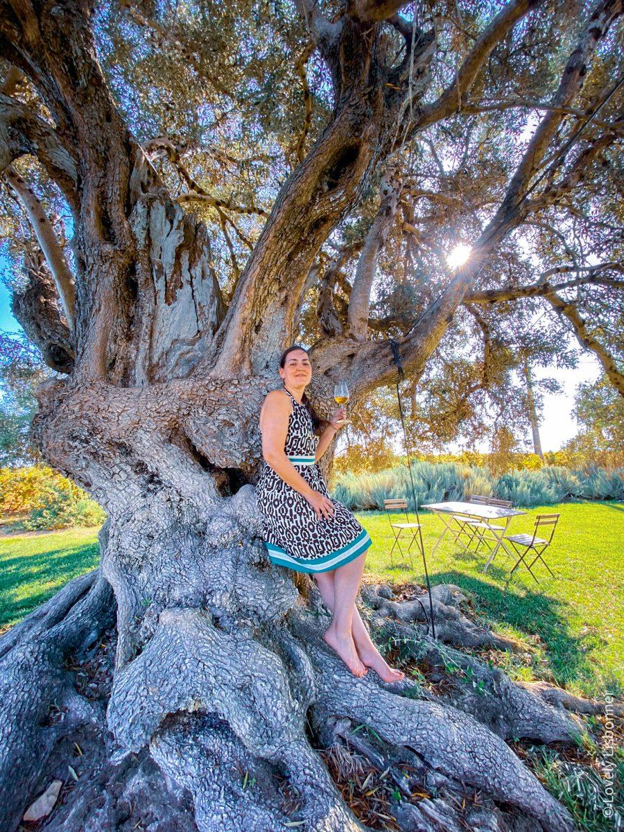 Enoturismo no Algarve - Quinta Morgado do Quintão - ©Lovely Lisbonner - Sónia Justo vinhos do algarve passeio nas vinhas arvóre milenar