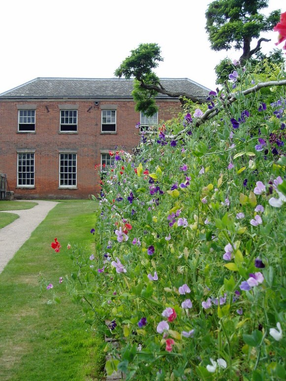 Derbyshire picnic spots - a border of sweet peas with an old house in the background