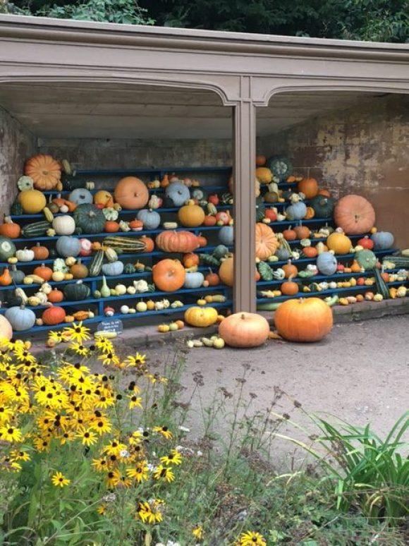 autumn in Derbyshire pumpkin display at Calke Abbey