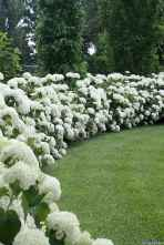 024 Beautiful Garden Design Ideas Backyard