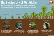 1.2. MacRitchie Biodiversity