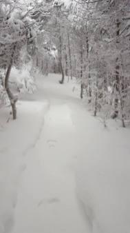 Rabbit tracks in the fresh snow