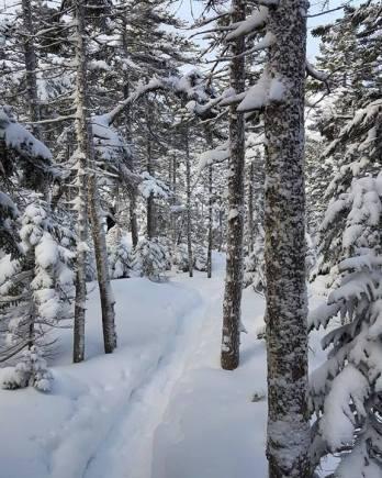 Snowy AT