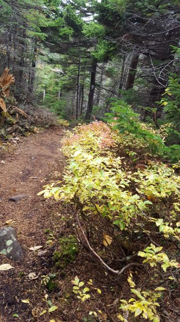 Nice section of trail leading to the lean-to