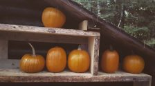 Pumpkins in the lean-to